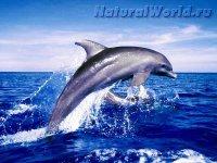 Фотографии моря.  Фото природы с высоким разрешением.